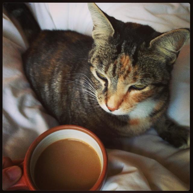 my coffee friend