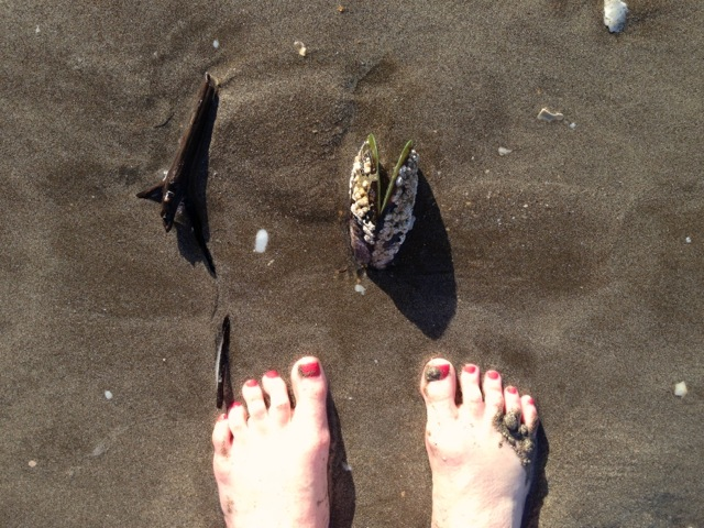 grounding with water earth and green mussel