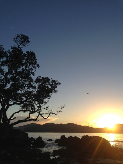 sunrise oakura