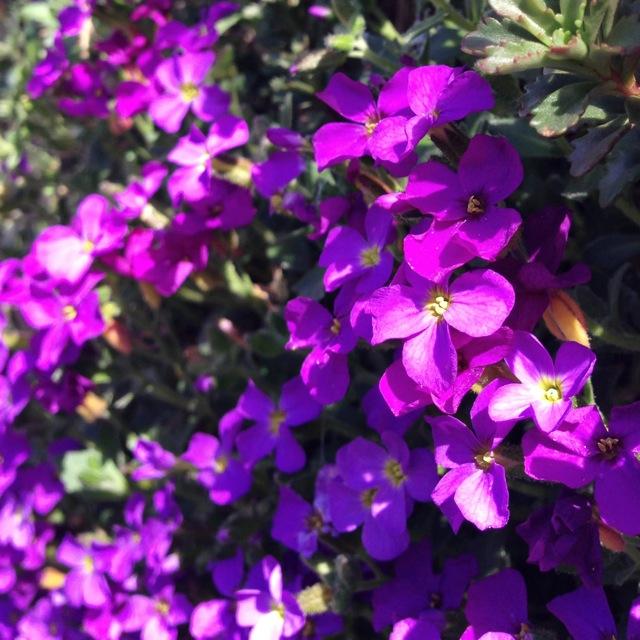 violet crown chakra