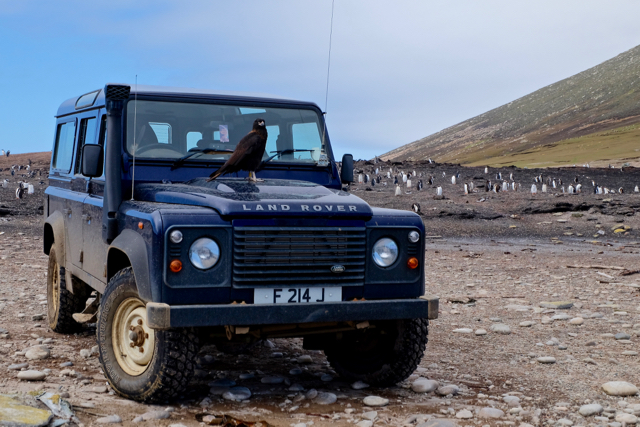 locals came down to greet us on Saunders Island