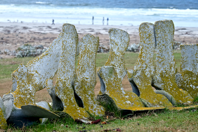 Mother Nature makes art of these remnant whale vertebrae