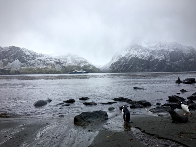 Godthul rain and snow with gentoo penguins, Antartic fur and elephant seals
