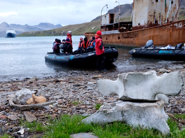 boarding zodiacs at Grytviken to return to Plancius for a braai and party onboard