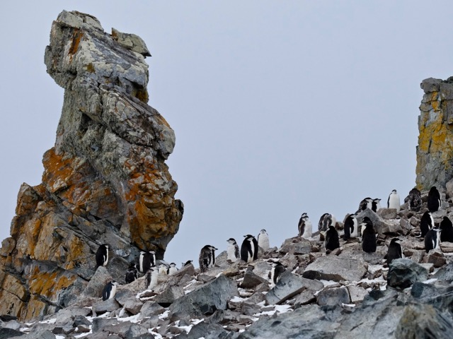 chinstrap penguin colony at Half Moon Island in the South Shetlands