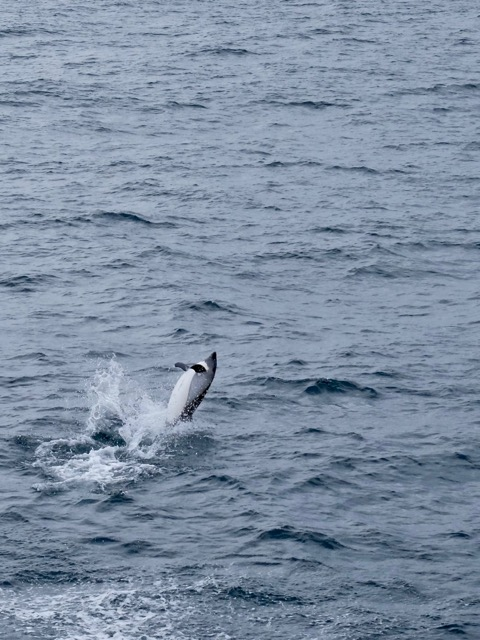 the trip ended with lots of splashes from a pod of dolphins