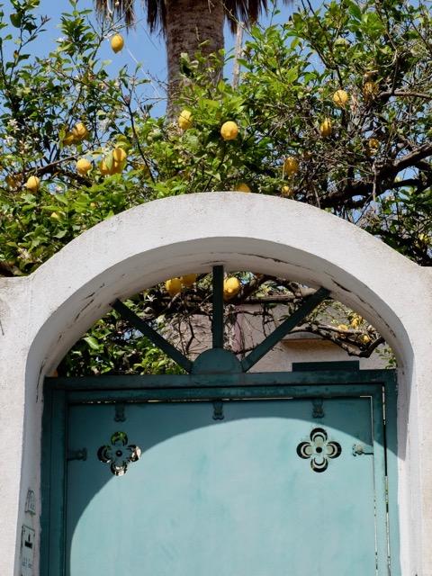 loads of lemons on Procida