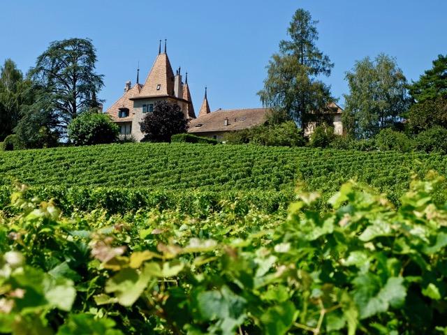 Echandens castle through the vines
