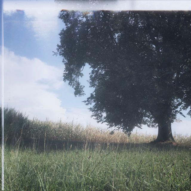 summer tree love