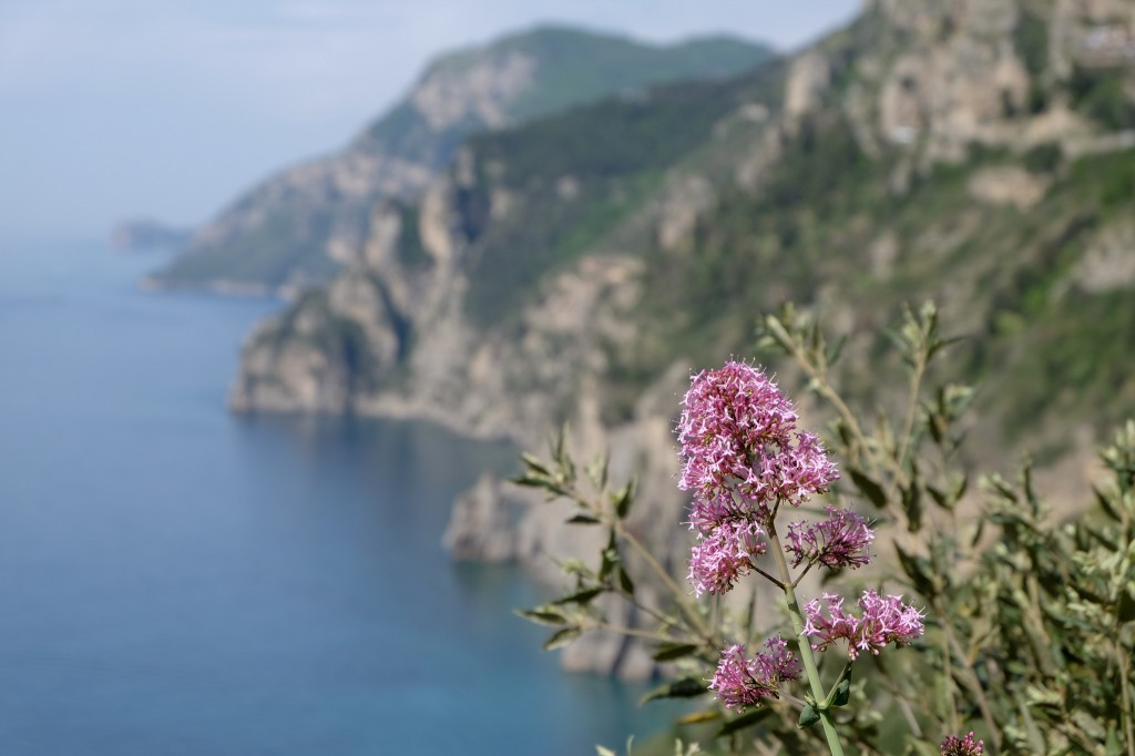 Amalfi coast flower power