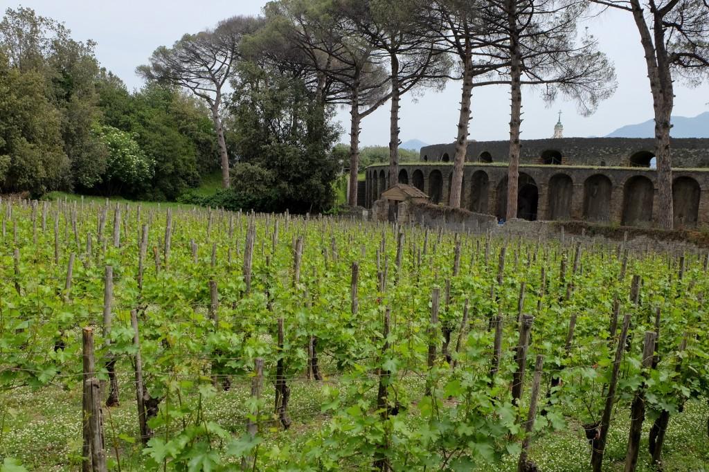 Pompeii vineyard and amphitheatre