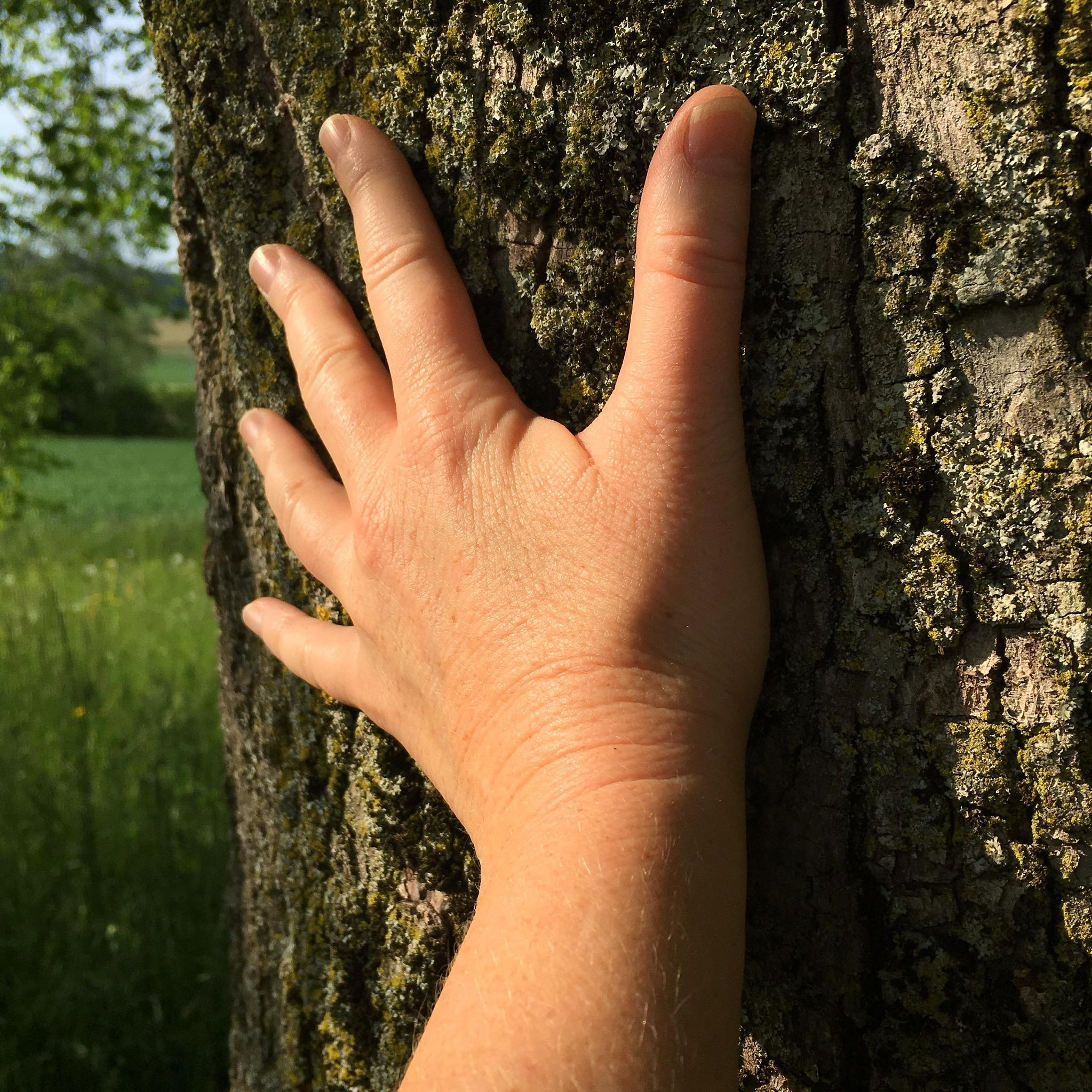 Tree energy